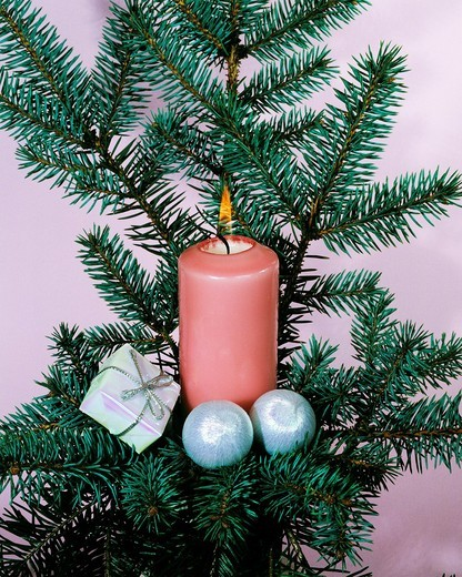 Stock Photo: 1566-829211 religion, Christianity, feast, festive season, Christmas, Christmas decoration, Christmas floral arrangement, candle, fir branches