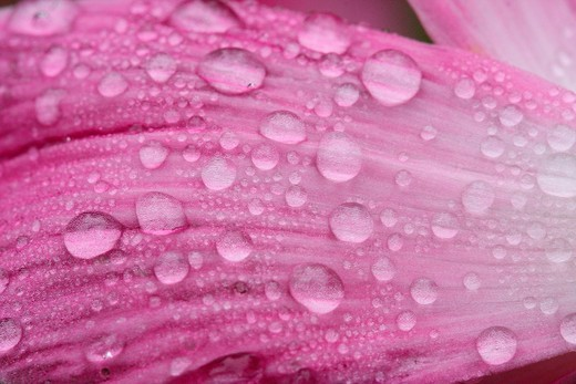 Stock Photo: 1566-831230 Flower with dewdrops.