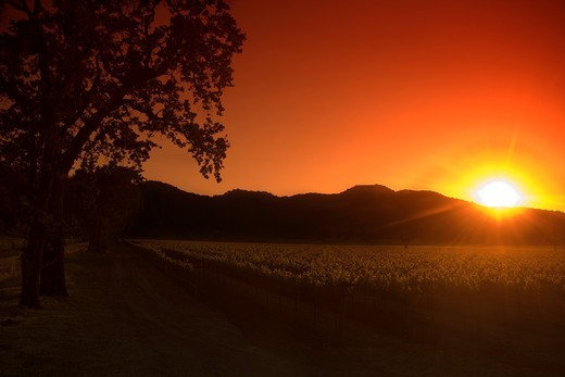VINEYARDS OFF ROUTE 29 HIGHWAY NAPA NAPA VALLEY CALIFORNIA USA : Stock Photo