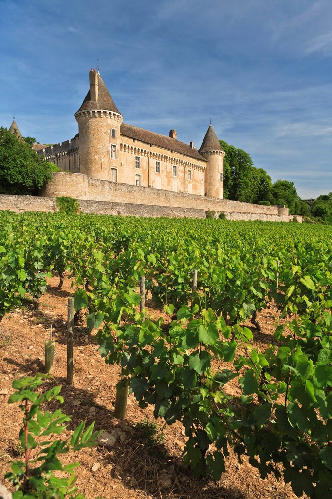 Rully castle and vineyards in Rully, Burgundy, France, Europe : Stock Photo