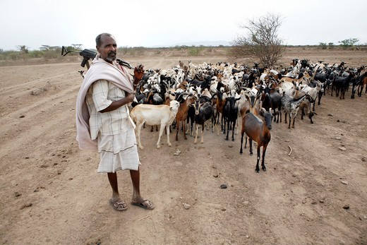 Ethiopian shepherd protects his herd with a gun : Stock Photo
