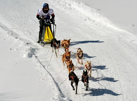 Stock Photo: 1566-835831 Dog Sled Races, Gadmen, Bernese Oberland, Switzerland