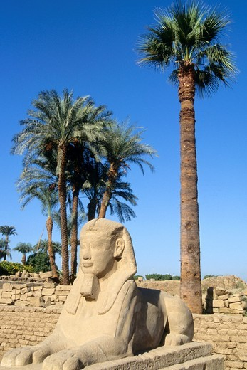 Stock Photo: 1566-836620 Egypt, Luxor, Luxor Temple, Avenue of Sphinxes