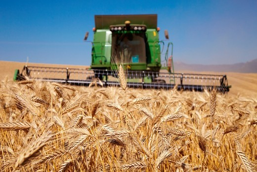 Stock Photo: 1566-837552 Agricultural machinery  Combine harvester on field of wheat  ´Learza´ estate  Near Estella, Navarre, Spain