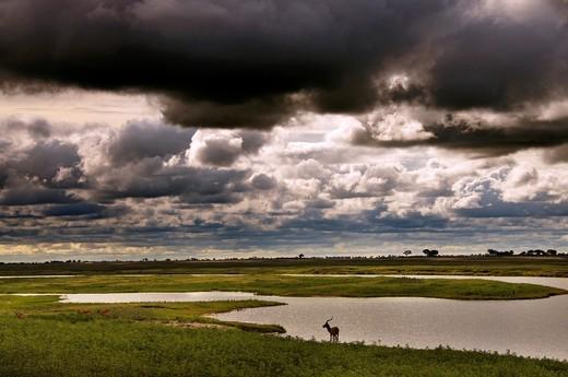 Stock Photo: 1566-837750 Chobe river between Botswana and Namibia, Chobe National Park, Botswana