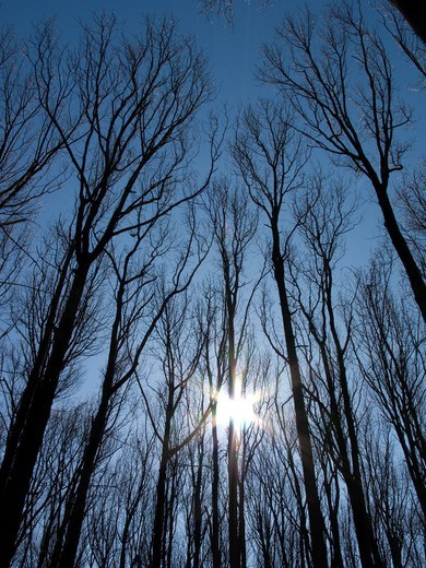 BARE LIMBS OF TREES IN FOREST IN WINTER : Stock Photo