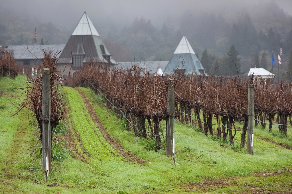 Stock Photo: 1566-842203 USA, California, Northern California, Russian River Wine Country, Geyserville, Francis Ford Coppola Winery