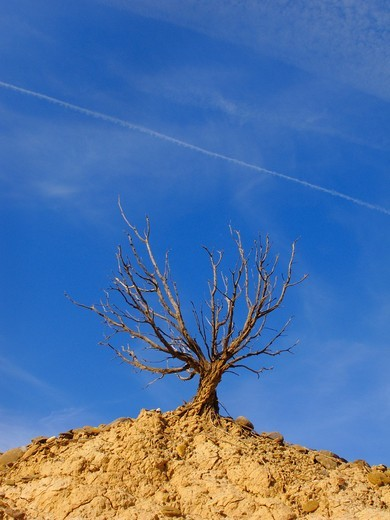 Stock Photo: 1566-844270 Dry tree in Bardenas Reales, Navarre, Spain