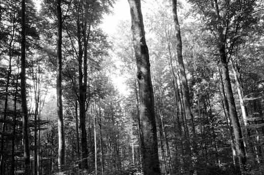 Trees in the devil kitchen in Bavaria : Stock Photo