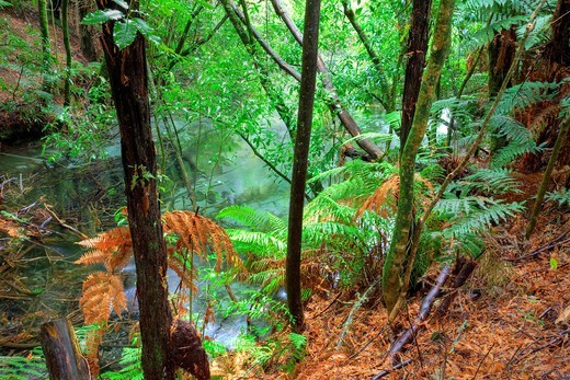 Hamurana Springs, Rotorua, North Island, New Zealand : Stock Photo