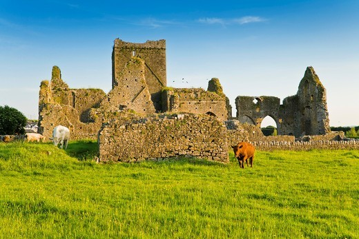 The ruins of Hore Abbey at sunset, Cashel, County Tipperary, Ireland, Europe : Stock Photo