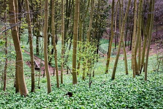 Stock Photo: 1566-848986 Millington Wood East Riding of Yorkshire England