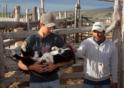Stock Photo: 1566-849079 Ely, Nevada - Stensen Vogler, 15, left, holds a border collie on his dad Hank Vogler´s Need More Sheep ranch  With him is a Peruvian sheep herder who works on the ranch  The Vogler family raises sheep in north Spring Valley, with permits to graze them on. Ely, Nevada - Stensen Vogler, 15, left, holds a border collie on his dad Hank Vogler´s Need More Sheep ranch  With him is a Peruvian sheep herder who works on the ranch  The Vogler family raises sheep in north Spring Valley, with permits to gra