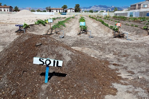 Las Vegas, Nevada - Tonopah Community Garden, a nonprofit garden that grows organic produce which is donated to organizations serving the less fortunate  It also rents plots to groups and individuals who grow their own vegetables : Stock Photo