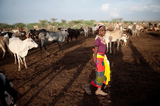 Ethiopian nomads with their cattle : Stock Photo