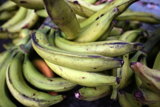 Stock Photo: 1566-850658 Bananas are an important export products, Colombia