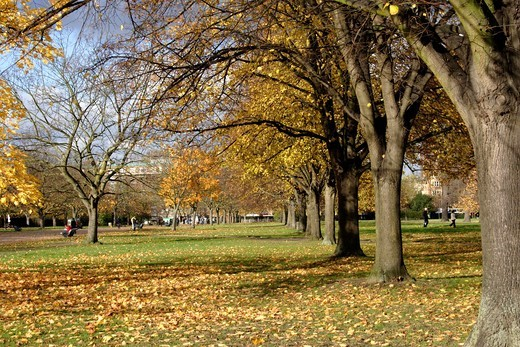 Stock Photo: 1566-866019 Autumn Trees Kensington Gardens London