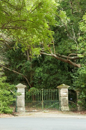 Closed Victorian gateway to a tree-lined driveway : Stock Photo