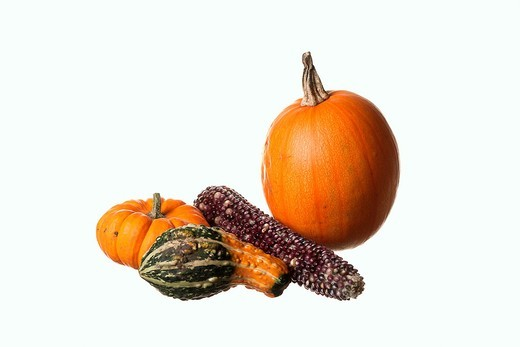 Stock Photo: 1566-870461 Assorted pumpkins and gourds along with an ear of indian corn against a white background