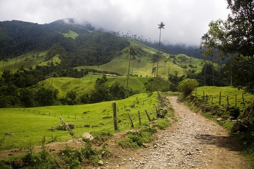 Cocora Valley, Colombia : Stock Photo