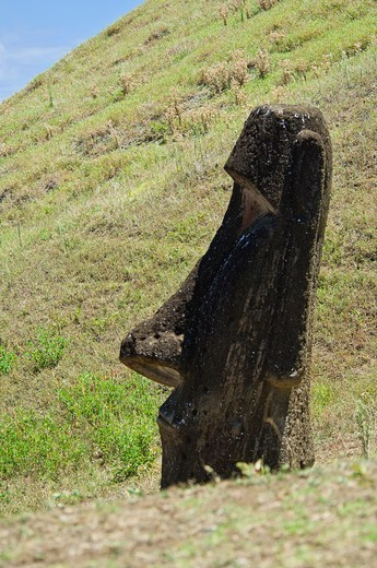 A partially buried moai on Easter Island. : Stock Photo