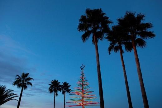 Tropical Christmas Tree : Stock Photo