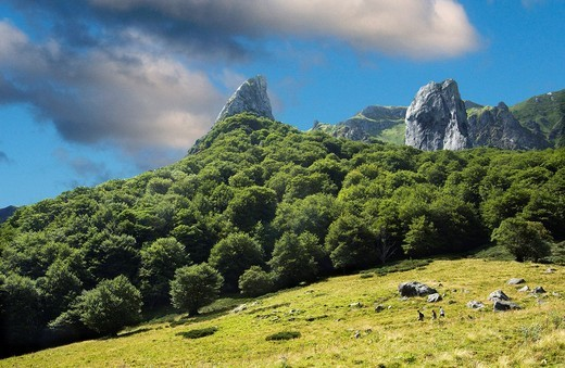 Stock Photo: 1566-875807 The Chaudefour valley, Puy de Dome, Auvergne, France, Europe