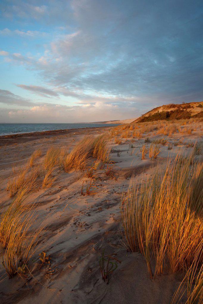 Stock Photo: 1566-877673 Atlantic Beach  La Teste de Buch  Gironde  Aquitaine  France  Europe