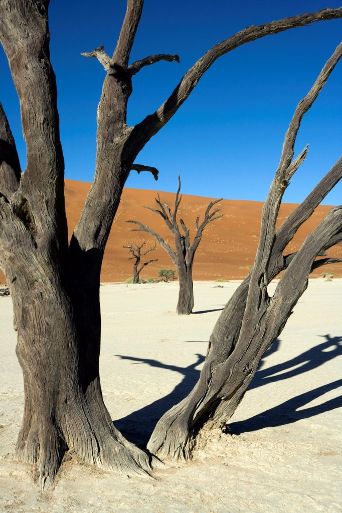 Stock Photo: 1566-880928 Dead Vlei in Sossusvlei National Park - Namib-Naukluft National Park, Namibia, Africa