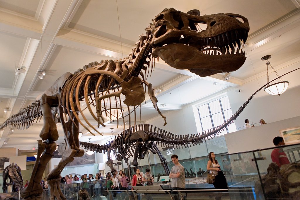 Stock Photo: 1566-881407 American Museum of Natural History  Hall of saurischian Dinosaurs,New York City, USA