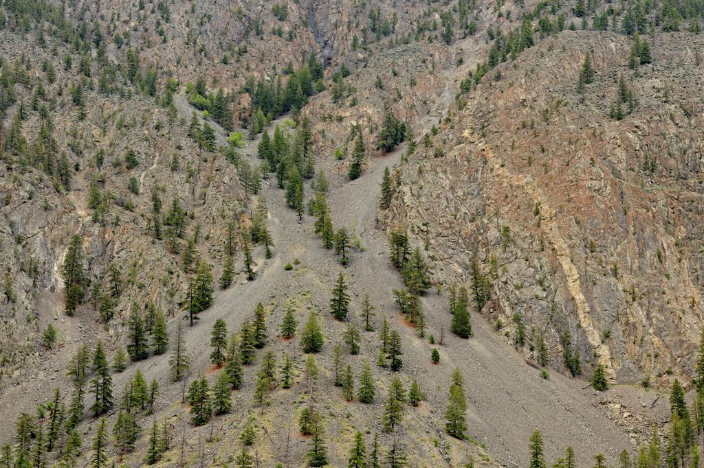 Arid mountain slopes with pine trees, near Hedley, BC, Canada : Stock Photo