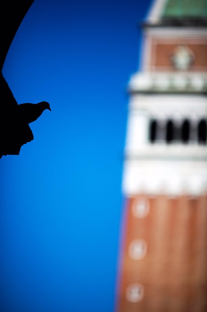 Stock Photo: 1566-885927 Silhouette of a dove on St Mark Square with the Campanile on the background, Venice, Italy