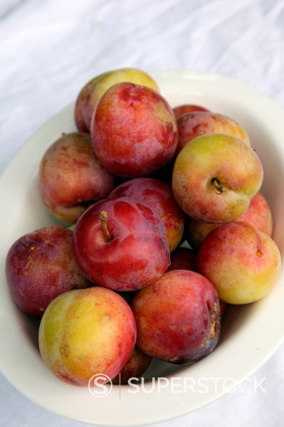 Stock Photo: 1566-886761 Plums - Prunus domestica ´Excalibur´