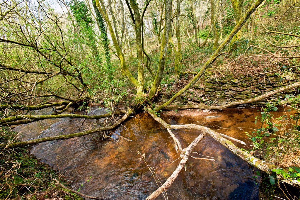vegetation of river. Tree in water. Valley of aff, broceliande, Morbihan, Brittany, France. Mysterious Valley or according to legend, Queen Guenievre confessed his love Lancelot : Stock Photo