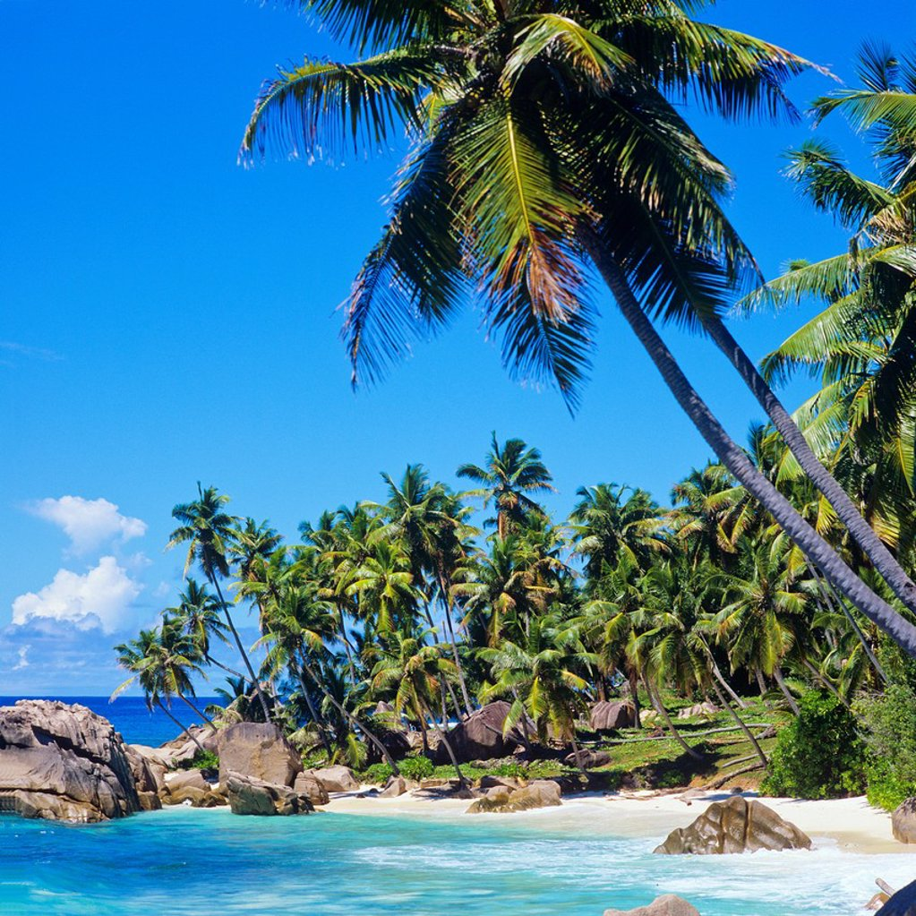 Stock Photo: 1566-887000 Beach with palm trees, granite rocks, sea, La Digue island, Seychelles