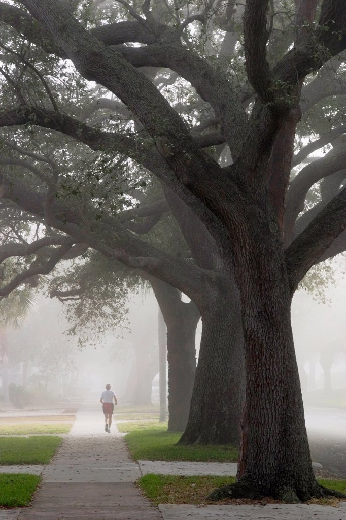 Stock Photo: 1566-888119 Man jogging in fog under Live Oak trees on West Venice Ave , Venice, Florida