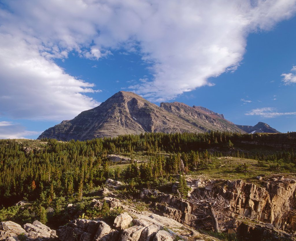 Wynn Mountain with clouds streaming overhead and stunted conifer forest, east side, Glacier National Park, Montana, USA : Stock Photo