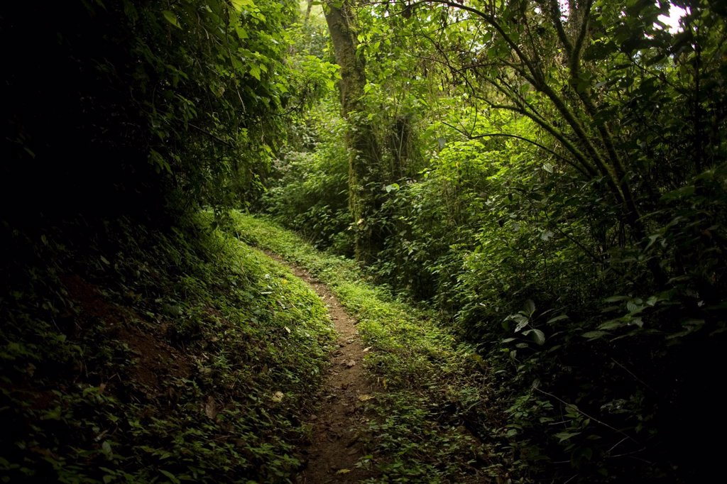 Trail in El Triunfo Biosphere Reserve in the Sierra Madre mountains, Chiapas state, Mexico    : Stock Photo