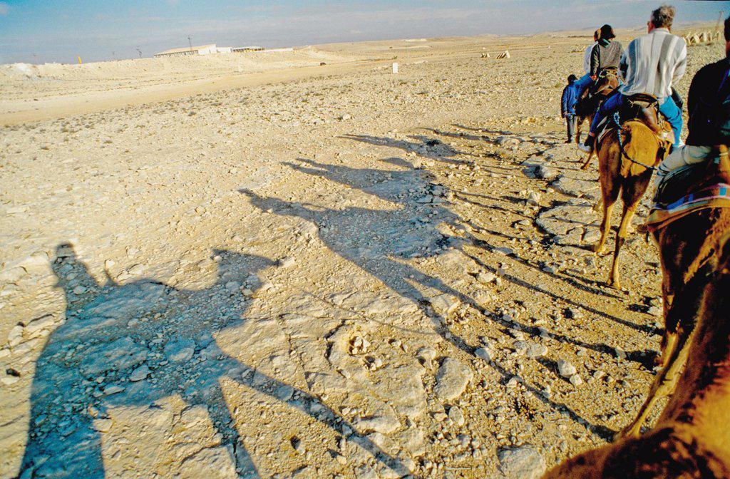 Dromedary Ride : Stock Photo