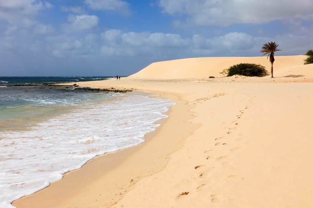 Stock Photo: 1566-891818 Praia de Chaves, Rabil, Boa Vista, Cape Verde Islands, Africa  Footprints along the shoreline of quiet white sandy beach to a palm tree and sand dunes