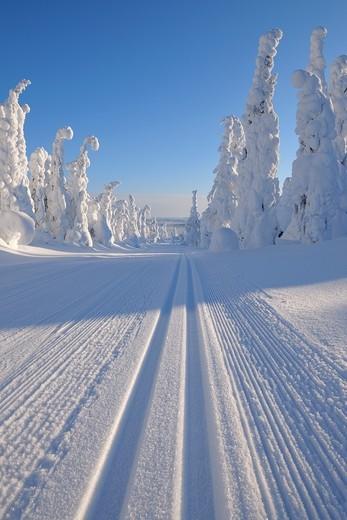 Stock Photo: 1566-894773 Cross-country ski trail, Winter, Rukatunturi, Ruka, Kuusamo, Nordoesterbotten, Suomi, Finland