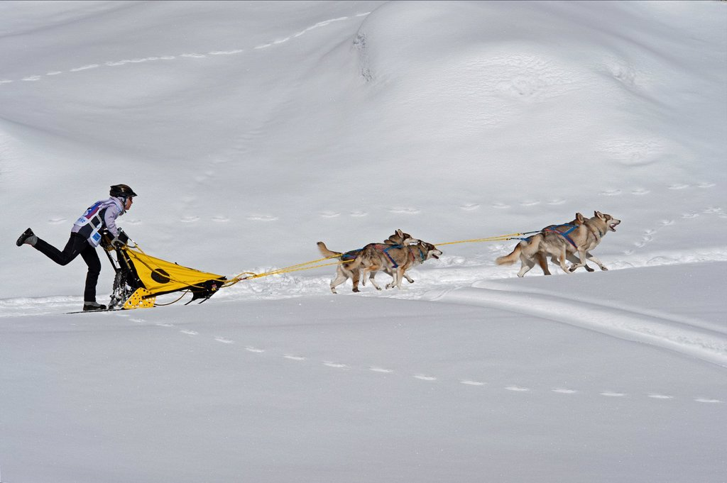 Stock Photo: 1566-896625 Dog Sled Races, Gadmen, Bernese Oberland, Switzerland
