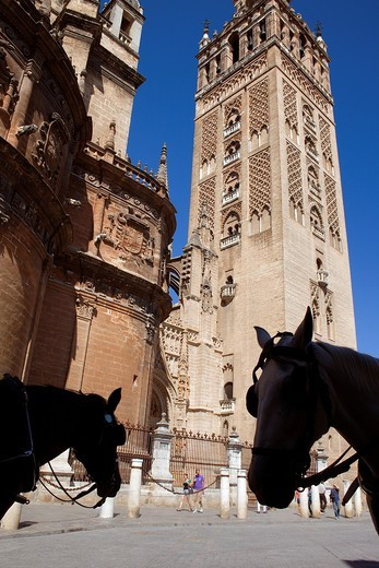 Stock Photo: 1566-898280 Cathedral,Giralda tower from Plaza Virgen de los Reyes,Sevilla,Andalucía,Spain