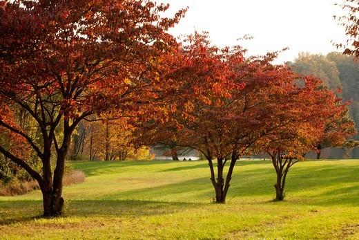 Fall color in Seneca Creek State Park : Stock Photo