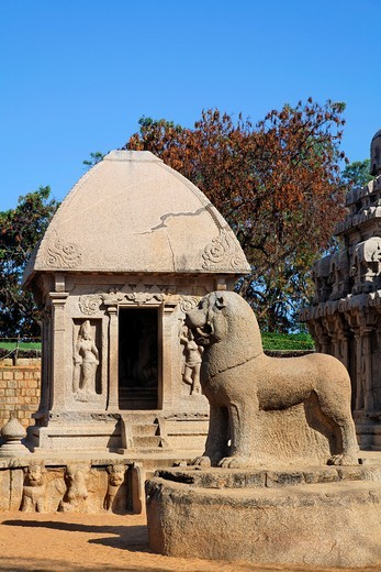 Lion statue at the Pancha Pandava Rathas, Mamallapuram, Tamil Nadu, India : Stock Photo