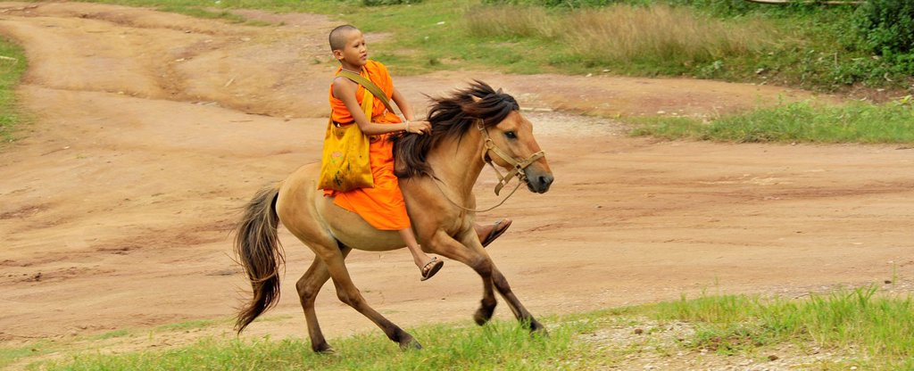 Stock Photo: 1566-899606 monks and novices collecting alms offerings on horseback , Wat Tam Pa Ar-Cha Thong