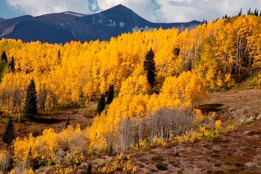 Autumn in the Ohio Pass of the San Juan Mountains : Stock Photo
