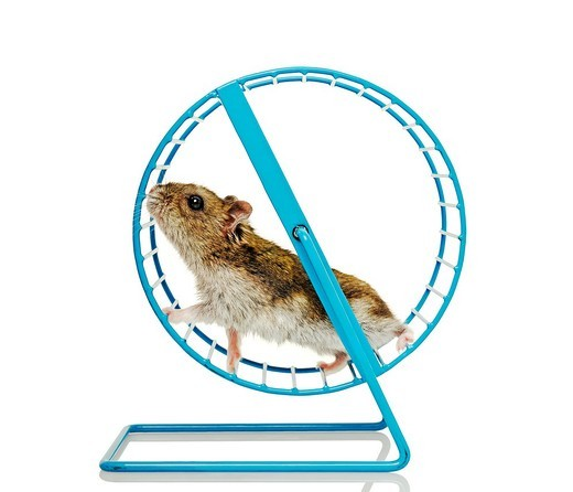 Hamster Running in a Wheel : Stock Photo