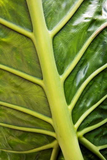 Stock Photo: 1566-901808 Close-up of Palm Leaf - North Carolina Arboretum - Asheville, North Carolina USA