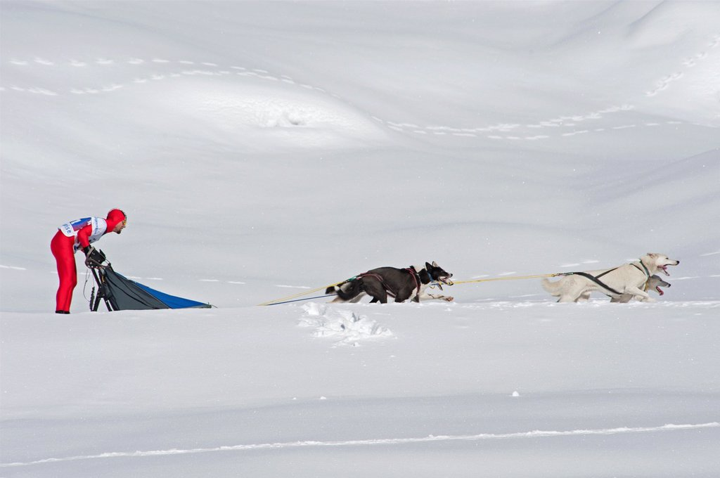 Stock Photo: 1566-903479 Dog Sled Races, Gadmen, Bernese Oberland, Switzerland